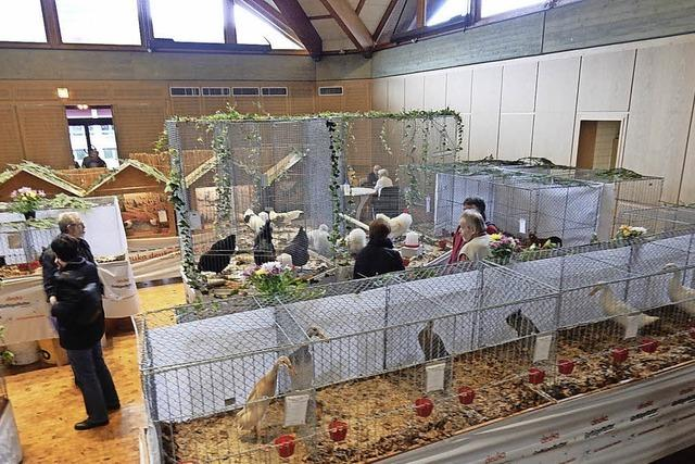 Hühner, Tauben, Enten