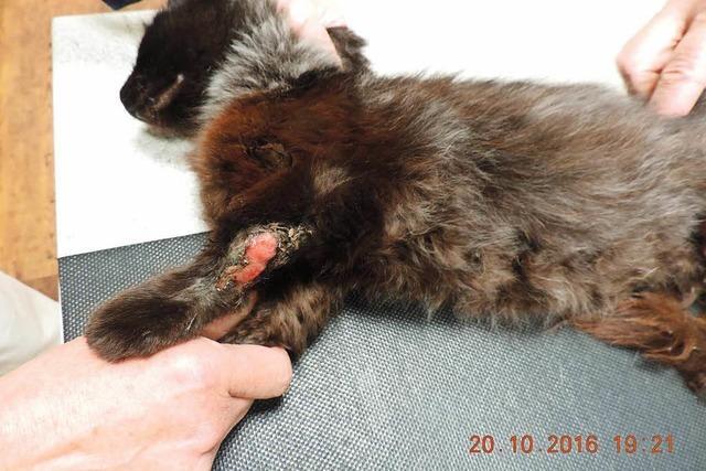 Kätzchen schwer verletzt: Landwirt wird angezeigt