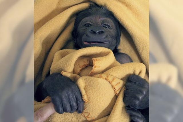 So ein süßes Baby!
