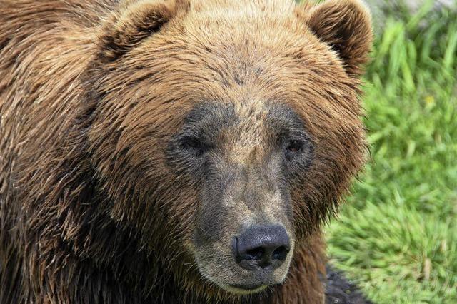 Bären auf dem Spielplatz