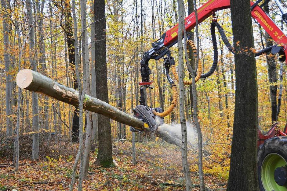 Der Holzvollernter fällt und zerkleinert Bäume im Wald bei Bollschweil. (Foto: Janina Ruth)