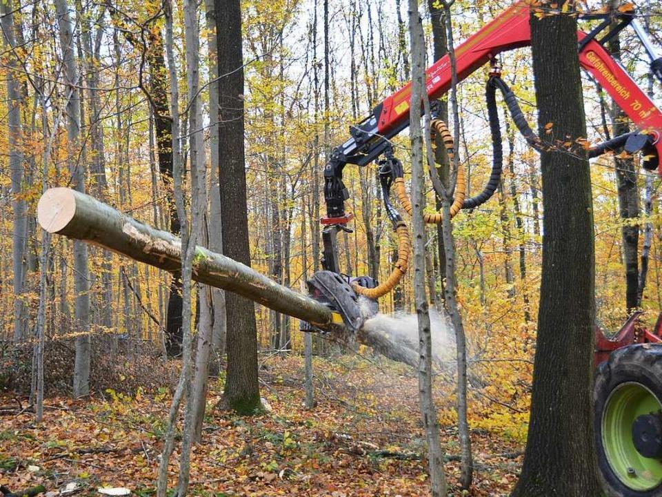 kamen bäume fällen