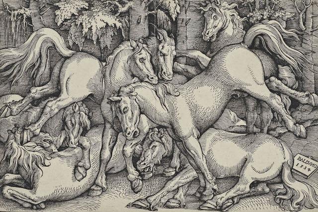 """Museumsleiter Tilmann von Stockhausen ist beeindruckt von Baldung Griens """"Wildpferden"""""""