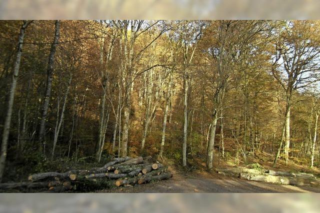 Der Stadtwald ist mehr als nur ein Holzlieferant