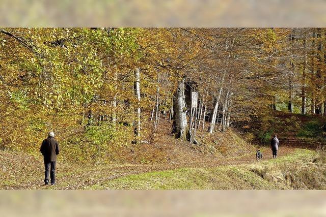 Goldener Herbst im Kleinen Wiesental