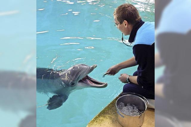 Delfin Arnie darf im Flugzeug fliegen