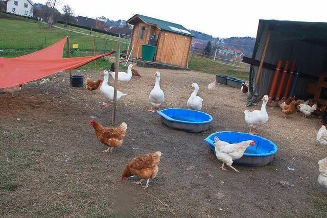 Hühnerzüchter will nach Räumungsandrohung umsatteln