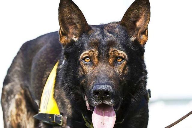 Mordfall Maria L.: Spürhunde führen Polizei zu Biochemie-Hörsaal