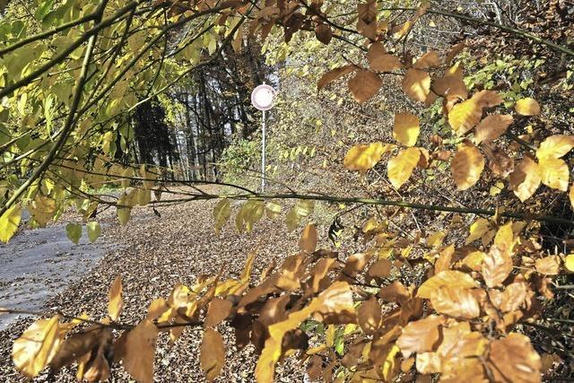 Käfer und hohe Fixkosten trüben den Forstbetrieb