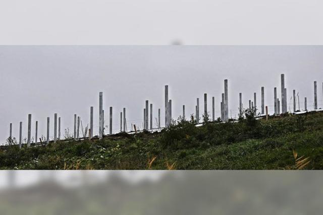 Sonnenmodule aus Taiwan für Herten
