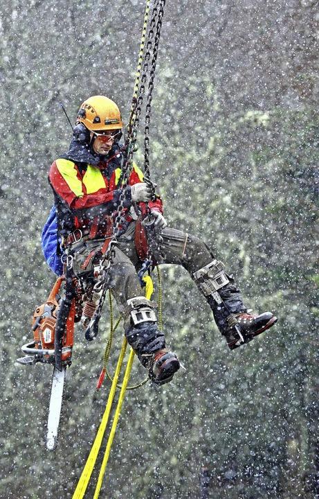 Forstwirt und Kletterspezialist Björn ... Meter Höhe in den Baumwipfel gehoben.  | Foto: Wolfgang Scheu