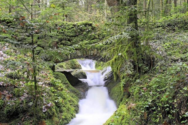 O Schwarzwald, o Heimat...