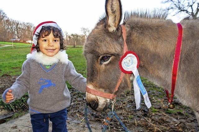 Hirtenspiel mit Eseln und Schafen in Lörrach