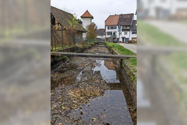 m Bereich Austraßen-Brücke wird das Ufer als Terrasse gestaltet