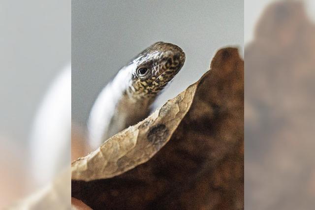 Reptil des Jahres
