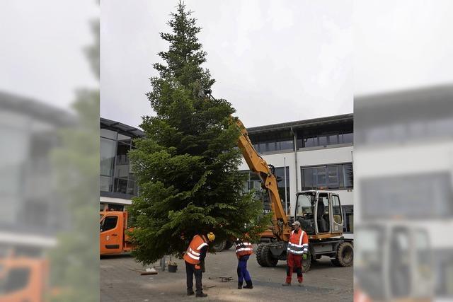 Kirsch-Secco am Weihnachtsbaum