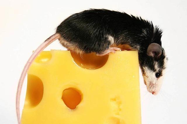 Nächtliche Mäusejagd ruft Polizei auf den Plan