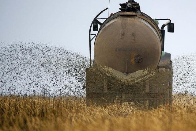 Sind Güllebörsen für Bauern einträglich?
