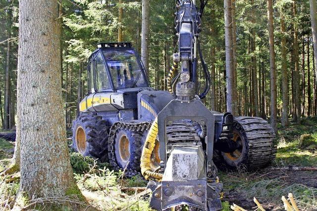 655 000 Euro Gewinn aus dem Stadtwald
