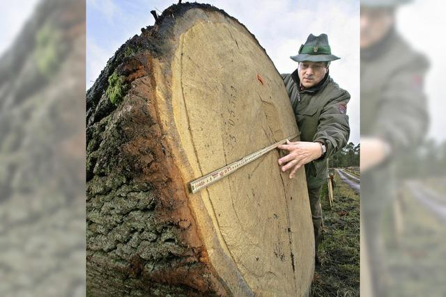 Bund will mit neuem Waldgesetz Kooperation zwischen Waldbesitzern und Forstbehörden verbessern