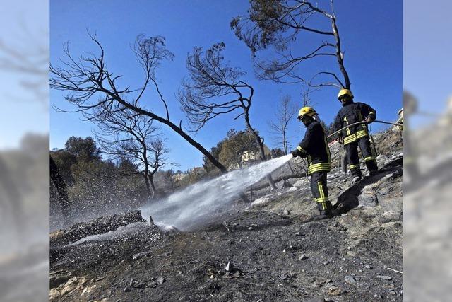 Feuer wüten in Israel: Sind Brandstifter am Werk?