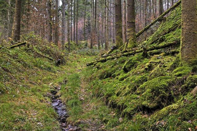 Spaziergänge in einem aufgeräumten Wald