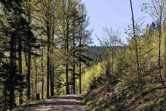 Wald bringt gute Erträge