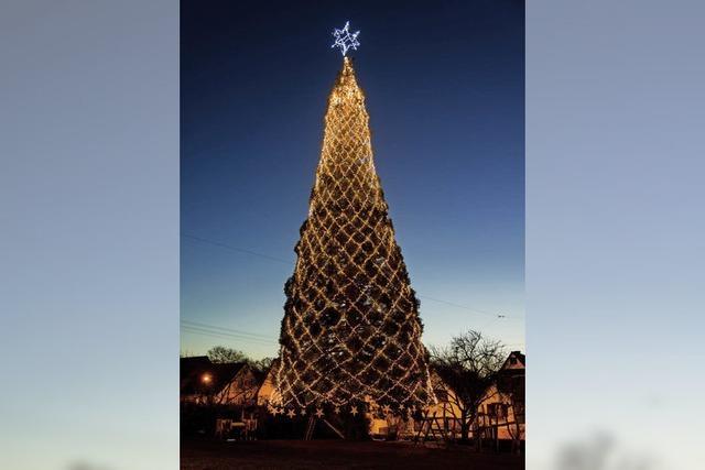 Der größte Baum steht wieder in Schmieheim