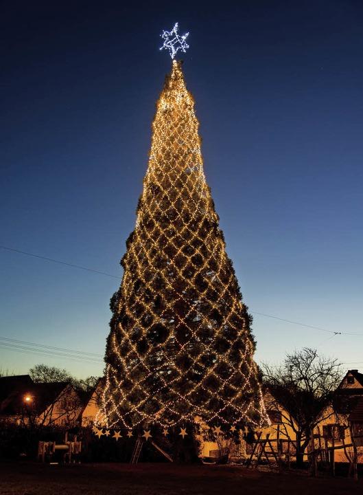 Größter Tannenbaum Deutschlands.Der Größte Baum Steht Wieder In Schmieheim Kippenheim Badische