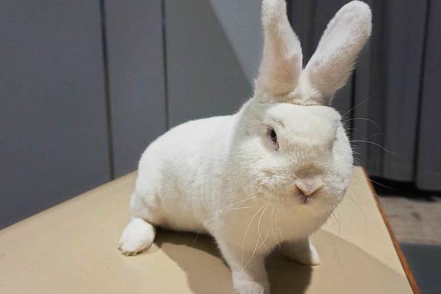 Liebe zum Kaninchen: Züchter zwischen Spott und Spaß