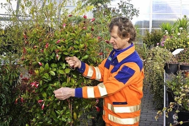 MACHT AUF DIE TÜR: Schutz für Pflanzen vor strengem Frost