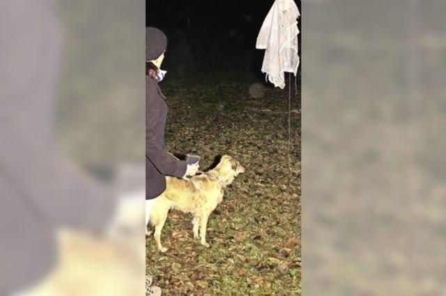 Nachtübung der Hundefreunde