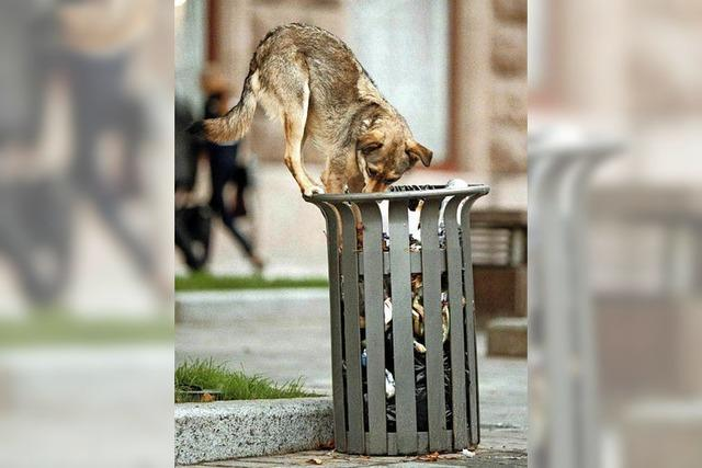 Bei der Aufnahme von Straßenhunden ist Vorsicht geboten