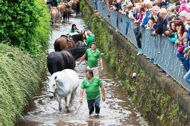 Trotz Kirchbergfest-Absage: Rossschwemme findet statt