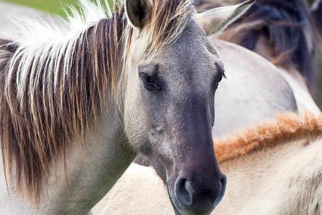 Verletztes Pferd: Unbekannter misshandelt Stute in Öflingen