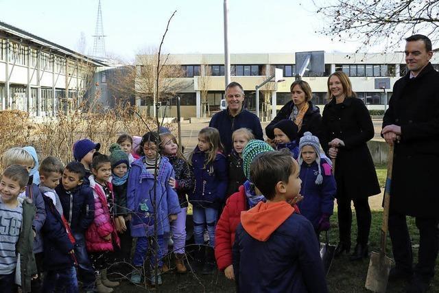 Winterlinde steht im Schulhof