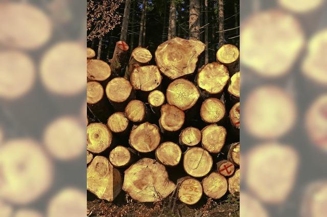Gute Zeiten für Waldbauern