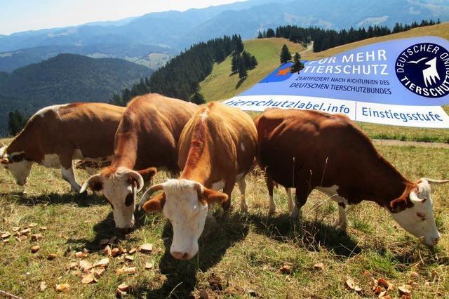 Ein Label für glückliche Kühe