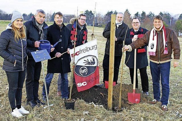 Bäume für SC-Tore in Bad Krozingen gepflanzt