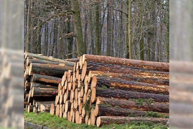 Aus dem Minus vom Wald wird ein Plus