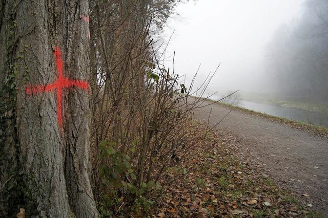 24 Bäume müssen weichen