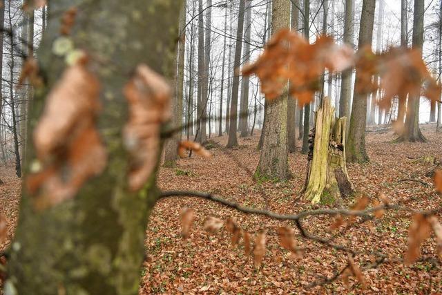 Der Klimawandel ist in den Wäldern angekommen