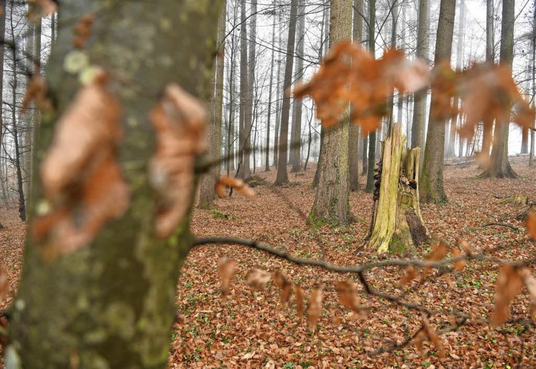 Der Wald ist in keinem guten Zustand, findet Minister Peter Hauk.   | Foto: dpa