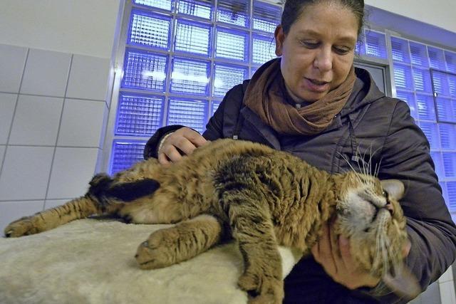 Christina Küfer ist Katzenstreichlerin im Freiburger Tierheim