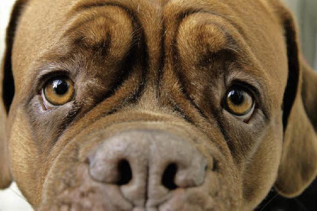 Steuererhöhung: Hundehalter werden stärker zu Kasse gebeten