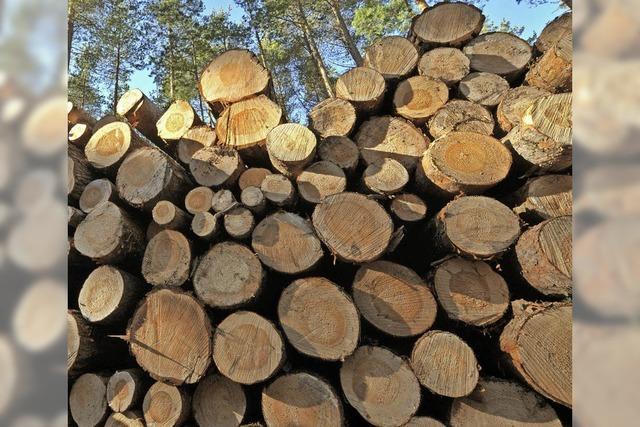 Holzernte schrumpft im kommenden Jahr