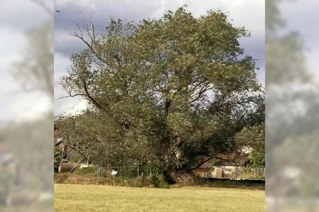 Baumfällung alarmiert die Anwohner