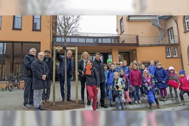 Neue Linde für die Grundschule Ettenheim