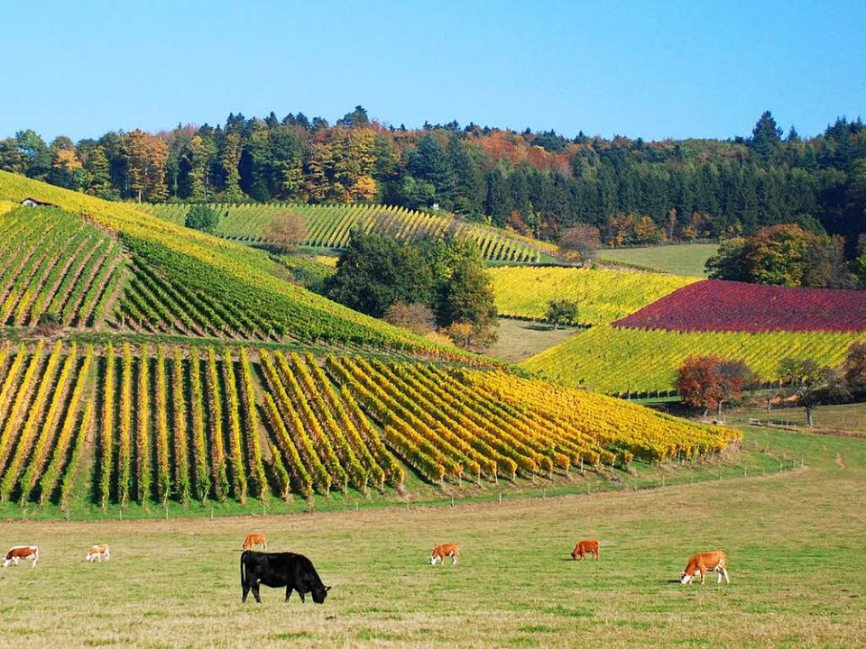 Herbstszene in Glottertal    Foto: Albert Rummler