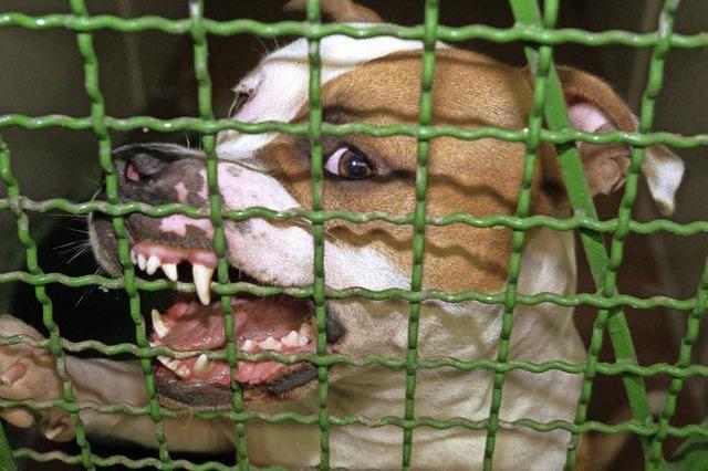 In Todtnau kosten Kampfhunde jetzt extra
